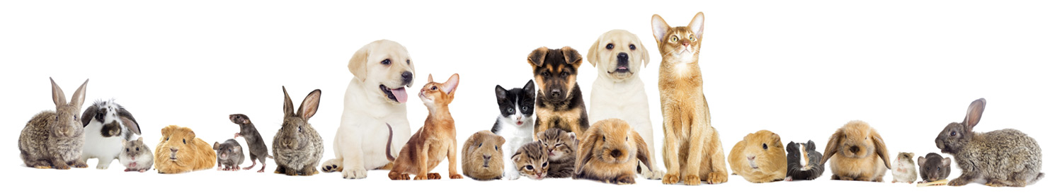Rossmore vet centre treats a wide range of animals, dogs, cats, rabbits, farm animals